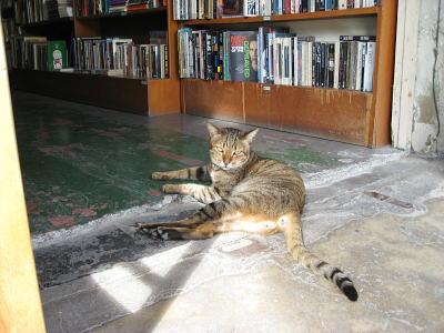 nekotabi2007.10 011s.jpg